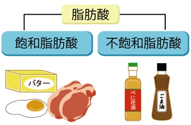 飽和 脂肪酸 と は 不
